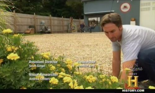 american pickers mike weeding