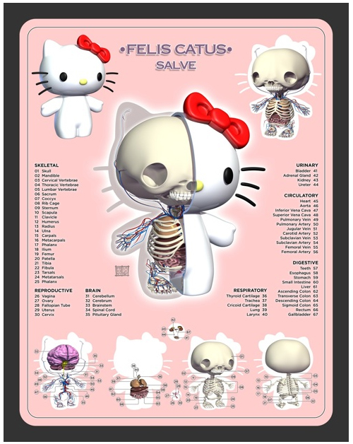freeny hello kitty anatomy