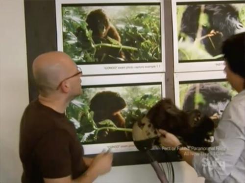 hollywood treasure gorilla