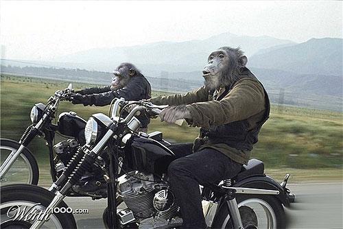 monkeys on motorcycles