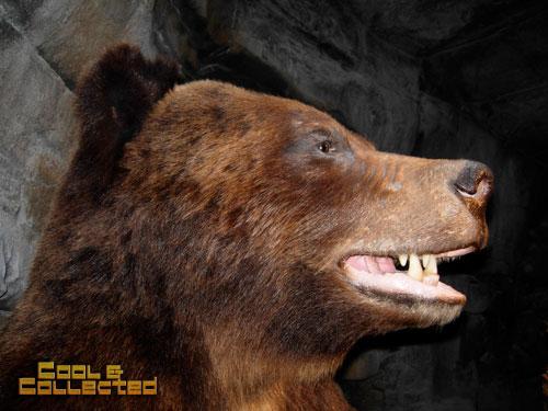 bass pro shops bear